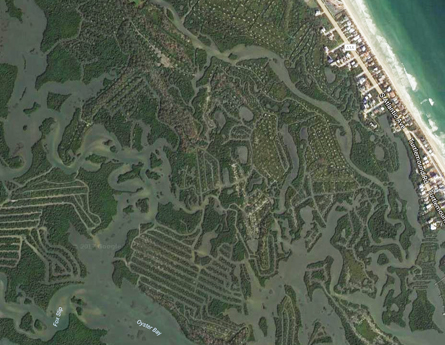 Satellite Photograph Of the Mangrove Green