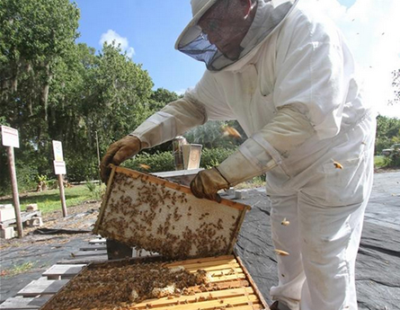 Beekeepers in New Smyrna Beach, FL
